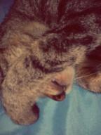 cat,mimi