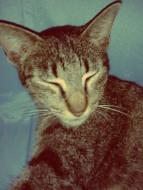 mimi the cat