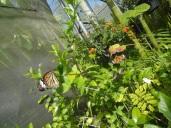 Bai Orchid-Butterfly Farm